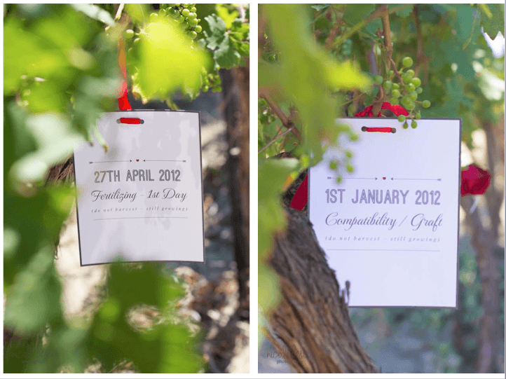 vineyard proposal