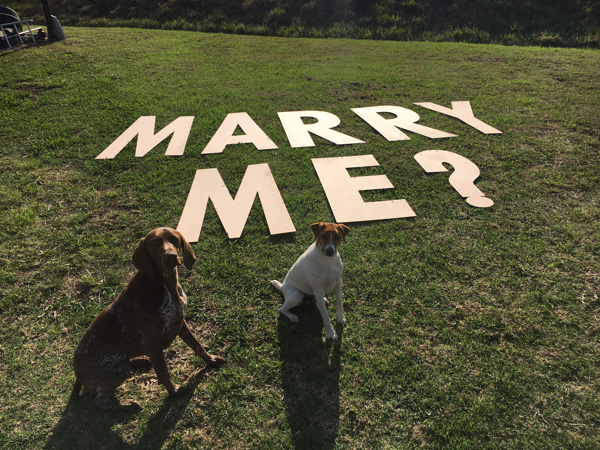 Marry me sign - The Perfect Proposal